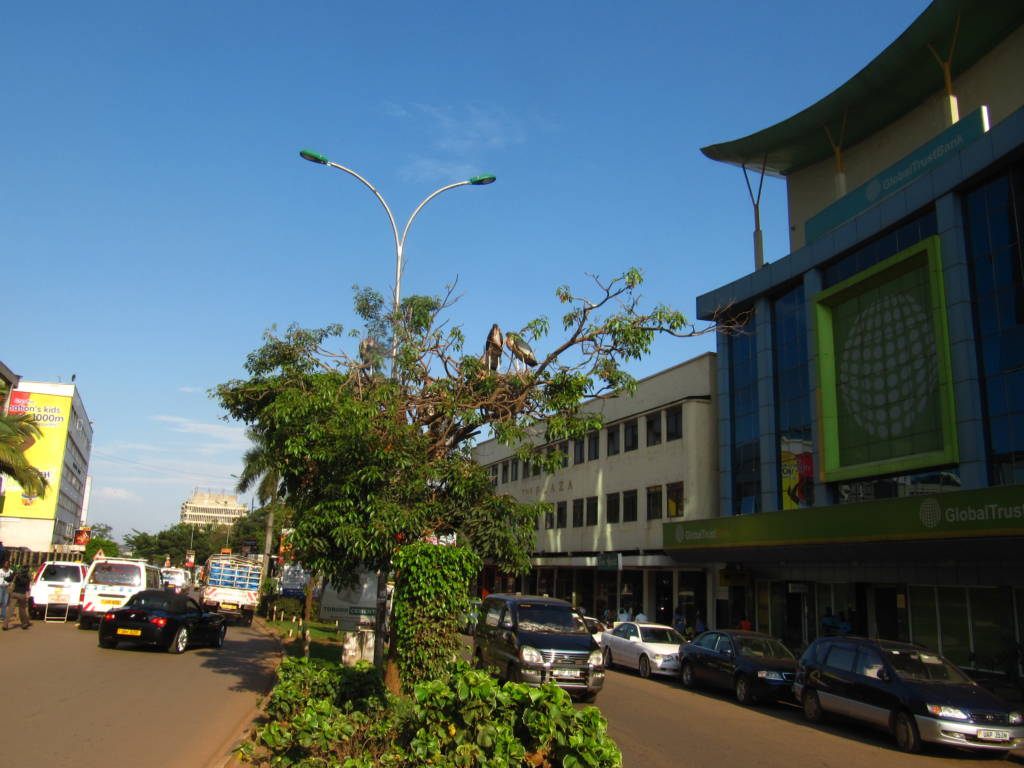 Wide shot of Kampala City; a tall building on the right side, cars on the road, a line of trees in the middle
