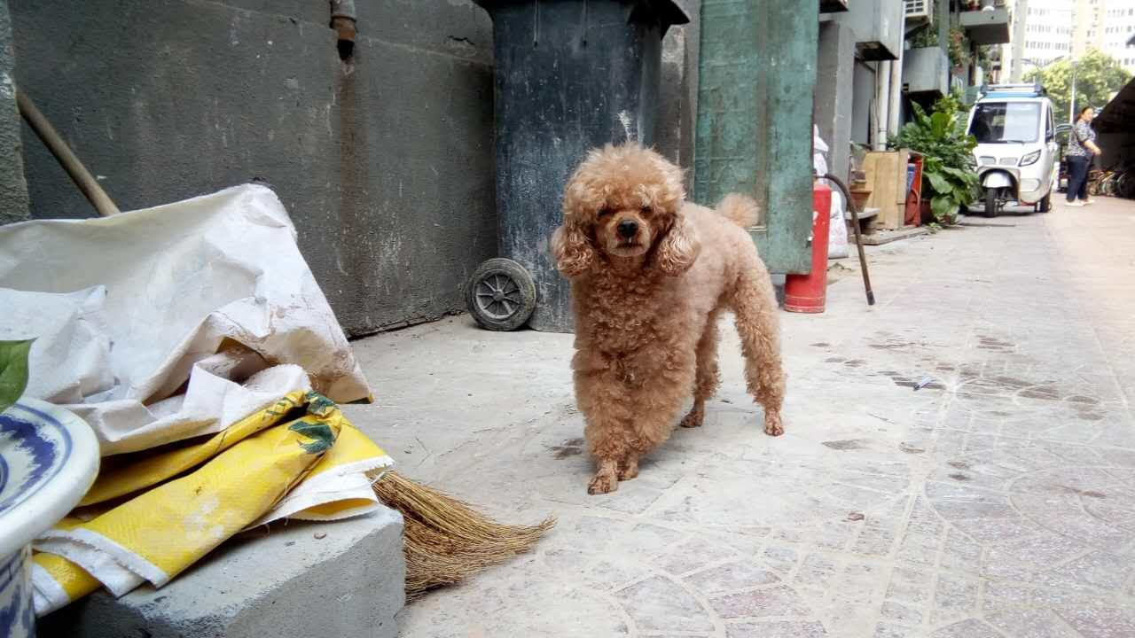 Dog in Beijing