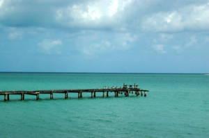 Jamaican dock